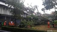 Diterjang Hujan Angin, Beringin Tumbang Timpa Kantor Wabup Garut