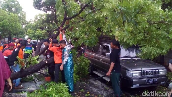 Pohon tumbang menimpa mobil di Kudus, Rabu (13/11/2019). Foto: Akrom Hazami/detikcom