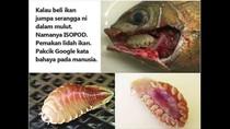 Beredar Imbauan Bahaya Parasit di Mulut Ikan, Bagaimana Faktanya?
