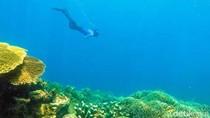 Surga Bawah Laut Sulawesi yang Mungkin Belum Kamu Tahu