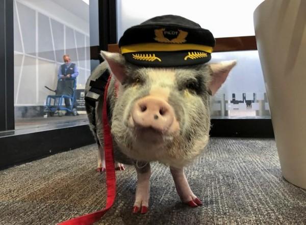 Gayanya pun nyentrik, mengenakan topi pilot dan kukunya yang dicat berwarna merah membuat siapapun akan teralihkan. (Jane Ross/Reuters)
