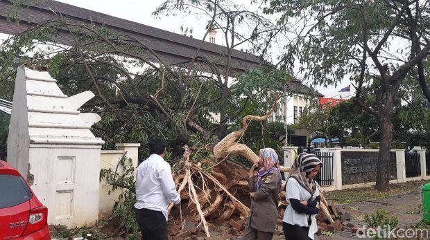Hujan disertai angin kencang menumbangkan pohon dan tower di Serang