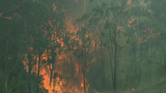 Kebakaran yang melalap kawasan hutan di wilayah New South Wales (Australian Broadcasting Corporation via AP)