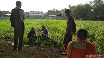 Ekskavasi Candi Gedog Dilanjutkan, Pemkot Blitar Anggarkan Dana 131 Juta