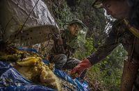 Demi Bertahan Hidup, Orang-orang Ini Rela Ambil Madu di Tebing Curam