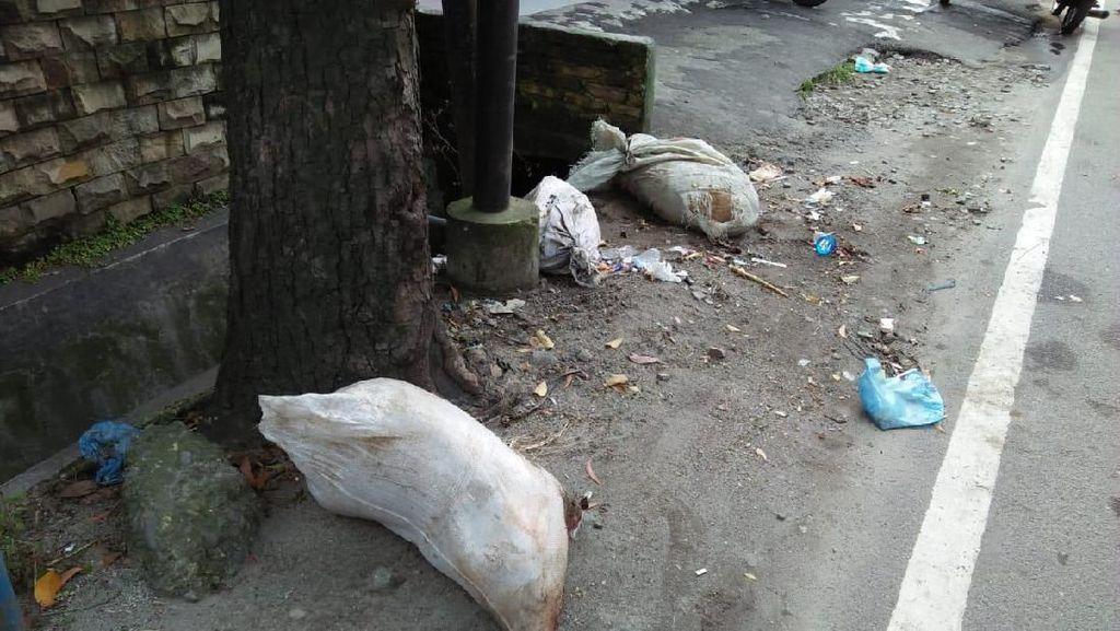 Bangkai Babi Kini Dibuang di Jalanan Medan, Ini Penampakannya