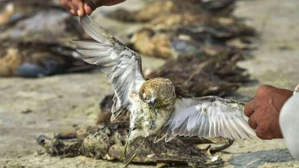 Misteri Ribuan Burung Mati Massal di Danau India