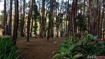 Pesanggem di Banyuwangi Resah dengan Munculnya Penggarap Lahan yang Lain