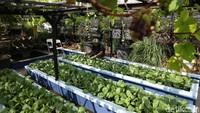 Nah, bagaimana dengan Anda? Tertarik mencoba berkebun ala urban farming?