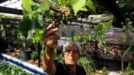 Konsep Urban Farming Jadi Inovasi Berkebun di Ibu Kota