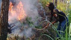 Pemadaman Kebakaran Hutan di Gunung Lawu Terkendala Angin Kencang