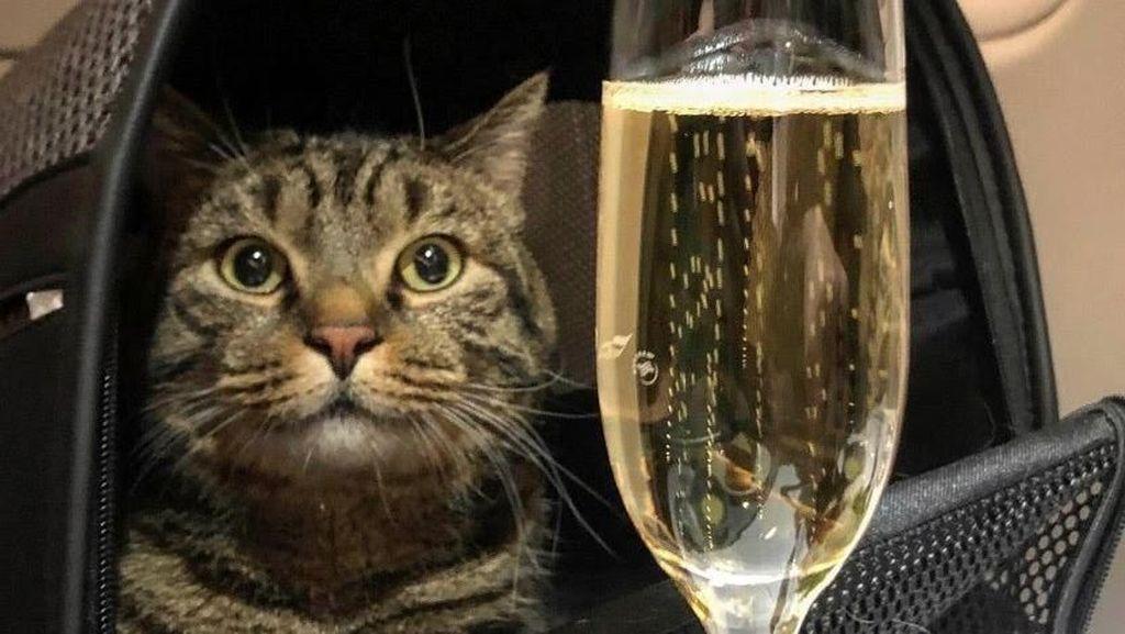 Drama Penumpang Pesawat Selundupkan... Kucing Peliharaan!