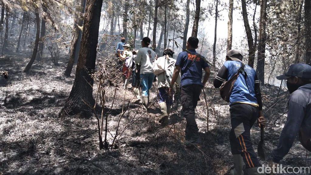 Kebakaran Hutan Gunung Lawu Belum Padam, 56 Pendaki Belum Turun