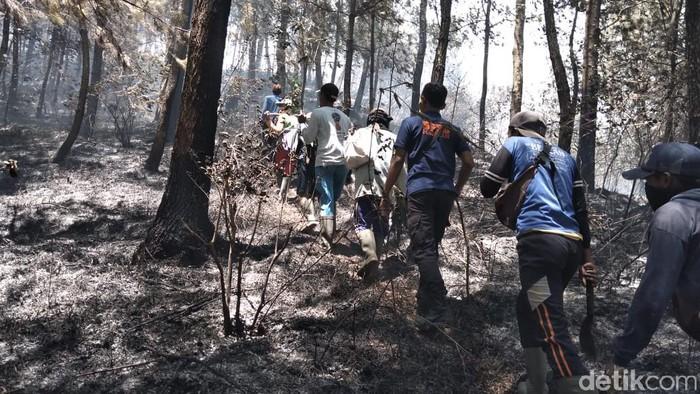 Petugas gabungan menyisir pendaki dan lokasi kebakaran (Foto: Istimewa)