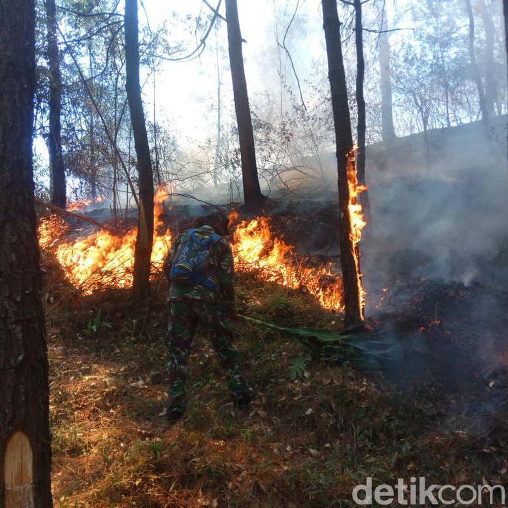 Kebakaran di Gunung Lawu Lalap 15 Hektare Lahan, Ratusan Pinus Mati
