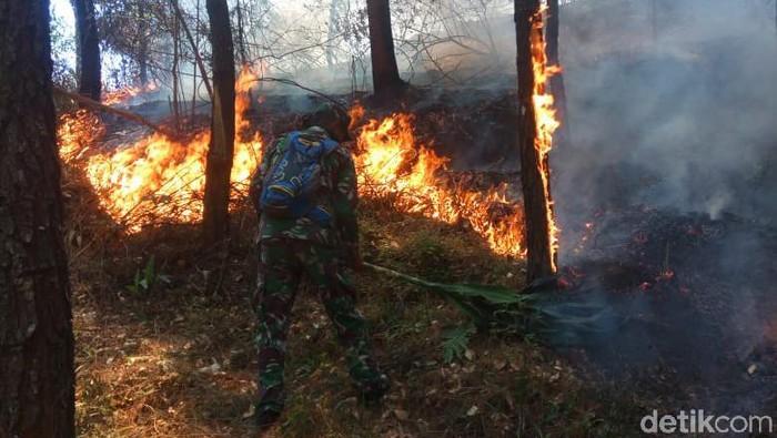 Kebakaran hutan pinus di Gunung Lawu/Foto: Istimewa
