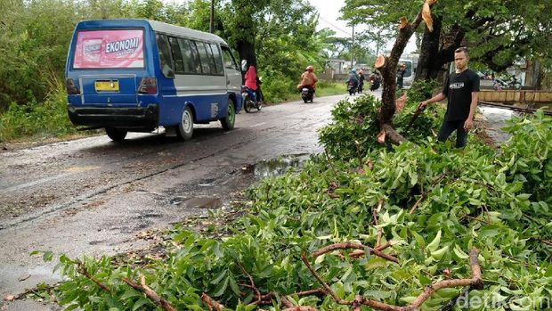 Hujan Disertai Angin, Pohon Tumbang Tutup Akses Jalan di Klaten