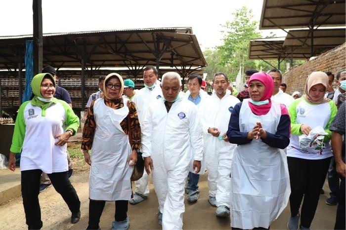 Gubernur Jatim Khofifah Indar Parawansa di dampingi Bupati Malang dan dinas terkait meninjau tempat peternakan ayam petelur.