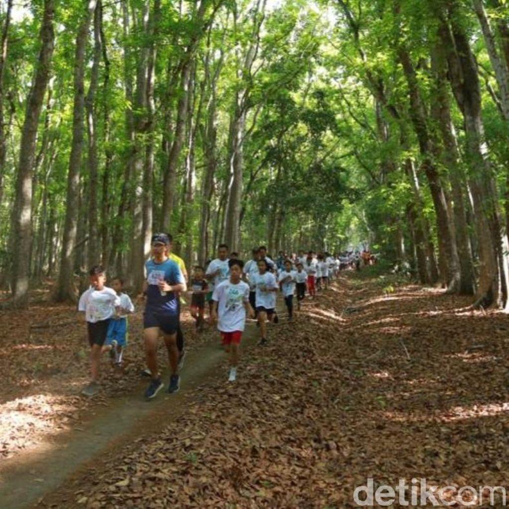 Ratusan Pelari Jajaki Trek di Tengah Geopark Alas Purwo Banyuwangi