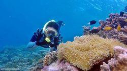 Definisi Wisata Bahari dan Potensi Indonesia