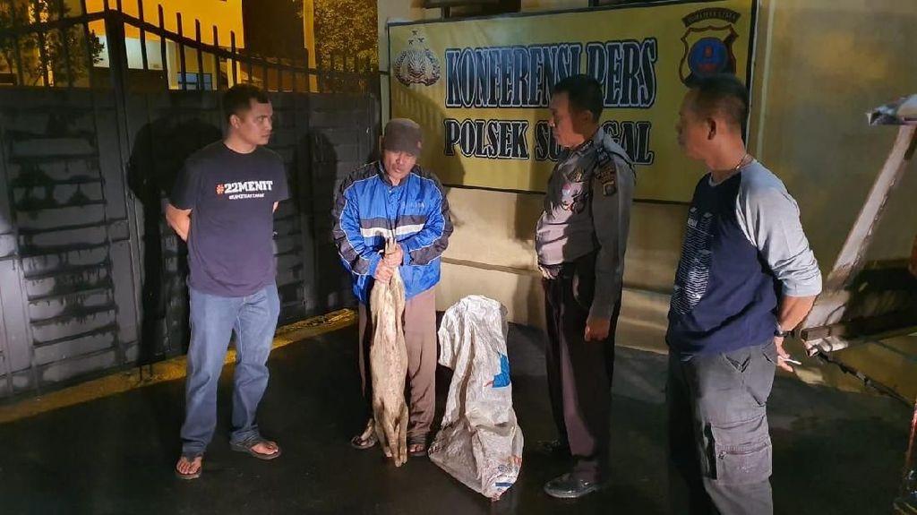 Driver Bentor Pembuang Babi Diamankan Polisi