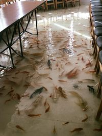 Seru! Di Restoran Ini Bisa Makan Sambil Merendam Kaki di Kolam Ikan
