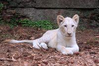 Gemas! Intip 6 Bayi Satwa Liar di Taman Safari Bogor