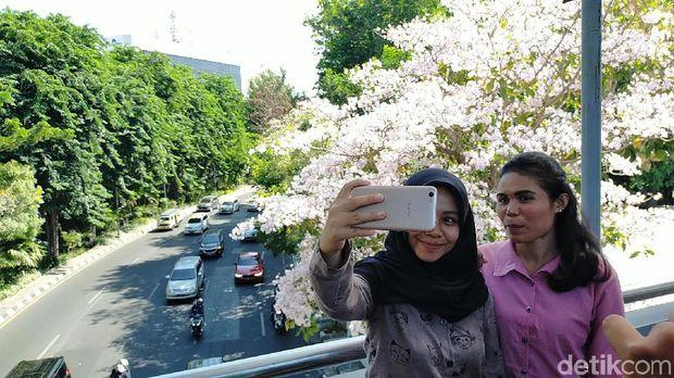 Ultah Risma di Tengah Pesona Tabebuya Bermekaran di Surabaya