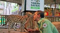 Gemas! Raut Kucing Hutan Afrika yang Takut tapi Kepo Saat Sentuh Es Batu