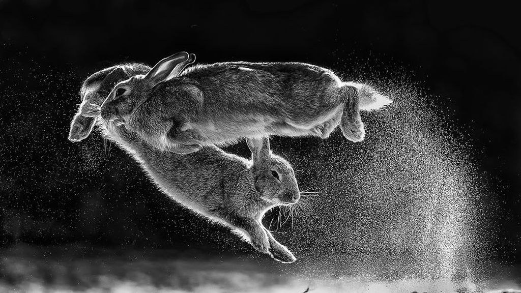 Pemenang keseluruhan dan kategori black and white: Jump oleh Csaba Daroczi (Hungaria). Foto: 2019 Nature Photographer Of The Year