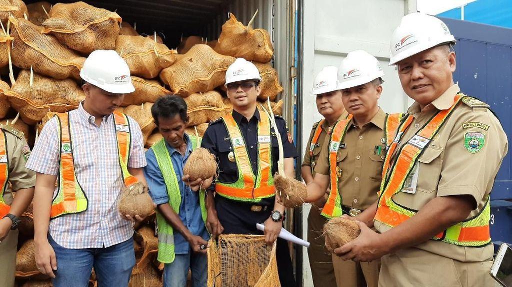 Thailand Pulangkan 25 Kontainer Kelapa RI Gara-gara Bertunas