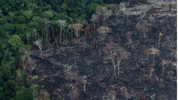 Kebakaran Hutan Brazil Ancam Keselamatan Paru-Paru Bumi