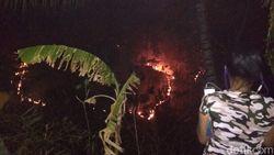 Kebakaran Hutan Pinus Ancam Pemukiman Warga Ponorogo