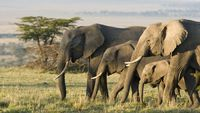 Tanda Tanya Nama Asli 'Afrika'