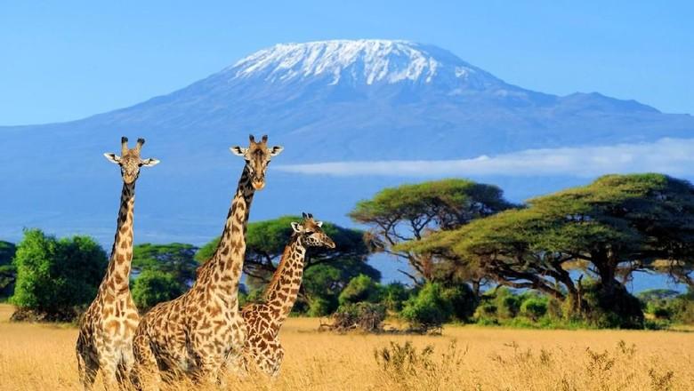 Ilustrasi Afrika (iStock)