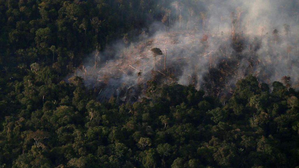 Kebakaran Hutan Brasil Ancam Paru-Paru Bumi