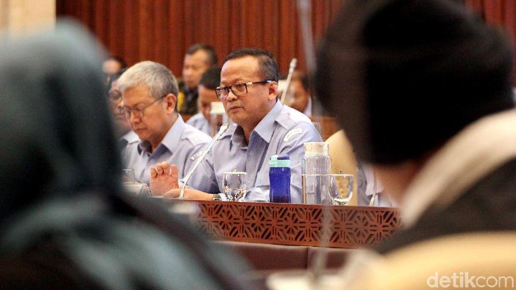 Dukung Ekspor Benih Lobster, Anggota DPR Sentil Mantan Menteri
