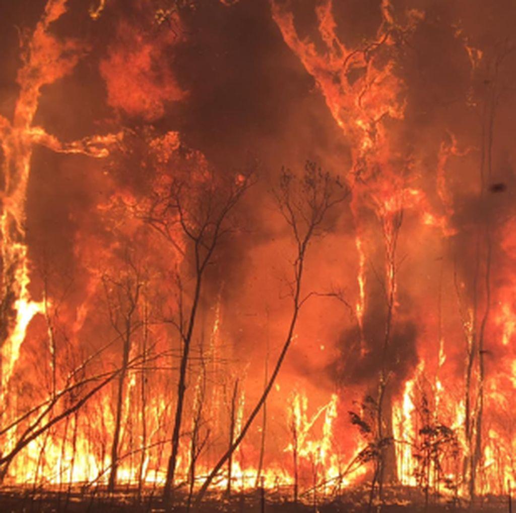 Kebakaran Hutan di Queensland Diduga Sengaja Dilakukan Anak-anak