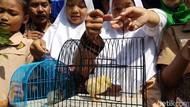 Oded Akui Program Chickenisasi Terhenti Sementara Imbas COVID-19