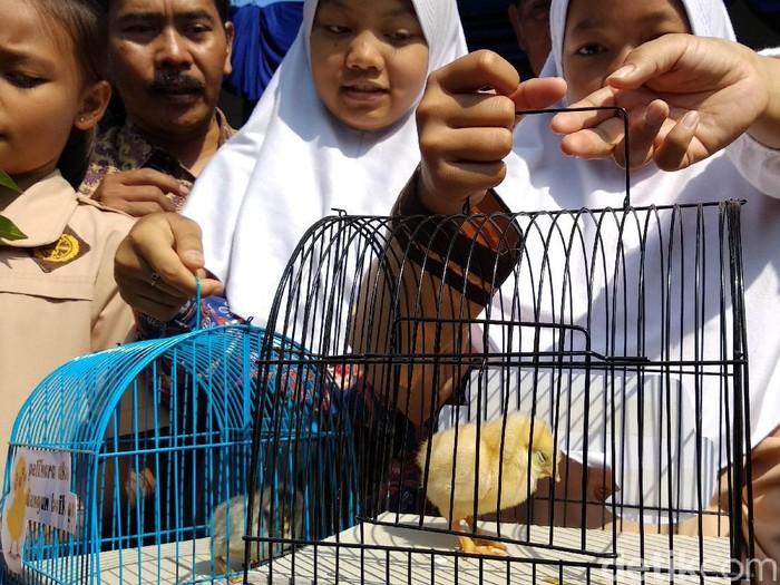 Pemkot Bandung memulai progam chickenisasi atau bagi-bagi ayam pada pelajar untuk cegah kecanduan gadget.