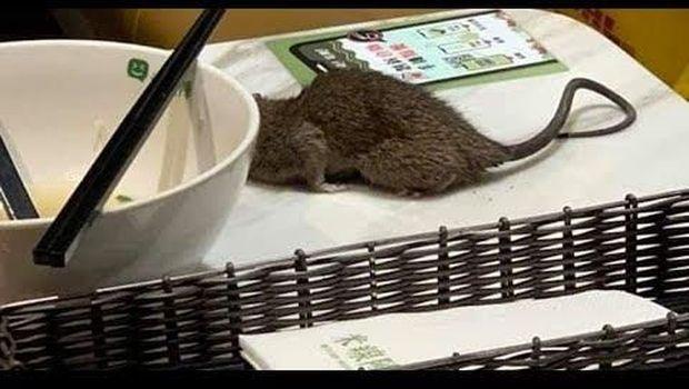 Kena Sial! Kepala Wanita Ini Dicakar Tikus Jatuh Saat Makan di Restoran