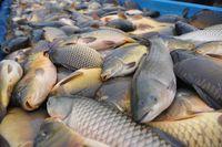 Stok Seafood Ekspor India Menumpuk Karena Virus Corona