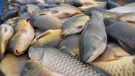 Pemerintah Kejar Target Konsumsi Ikan 54 kg per Kapita