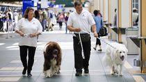 Potret 5 Bandara Tersehat & Paling Membahagiakan di Dunia