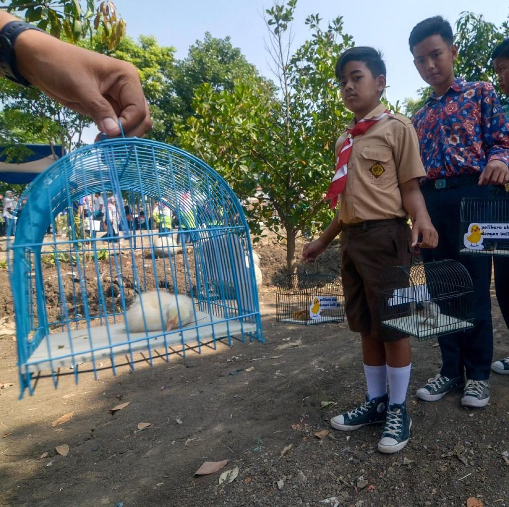 Pemkot Bandung Bagi-bagi Anak Ayam Untuk Cegah Kecanduan Gadget