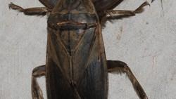Kembali beredar pesan di media sosial tentang serangga misterius yang gigitannya dapat membuat kulit jadi bolong-bolong. Kabar tersebut dipastikan hoax.