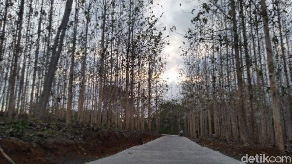 Kebun Jati di Ciamis Ini Lagi Ngehits sebagai Spot Foto & Selfie