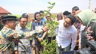 Kata Menteri Desa soal Pabrik Tahu Berbahan Bakar Sampah Plastik Impor