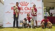 Cegah Rabies, Ratusan Anjing Ikut Veterinary Festival 2019