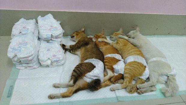 Kucing liar yang telah disterilisasi.